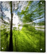 Enchanted Forest 5 Acrylic Print