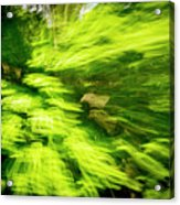 Enchanted Forest 6 Acrylic Print