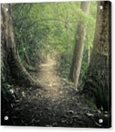 Enchanted Forrest Acrylic Print