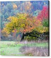 Enchanted Park Acrylic Print by Lori Seaman