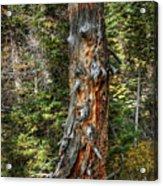 Enchanted Tree Acrylic Print