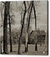 Home In The Wood Acrylic Print