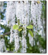 Encyclopedia Of Spring Image 7 Acrylic Print