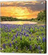 End Of A Bluebonnet Day Acrylic Print