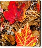 End Of Fall Acrylic Print