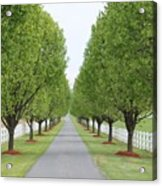 Endless  Country Road Acrylic Print