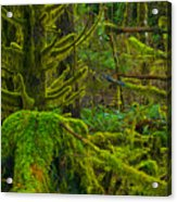Endless Green Acrylic Print