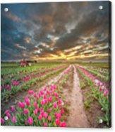 Endless Tulip Field Acrylic Print