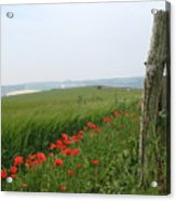 England Sussex Poppy Field Acrylic Print