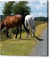 England - Wild Horses Acrylic Print