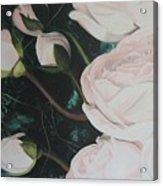 Englische Rosen Acrylic Print