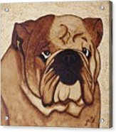 English Bulldog Coffee Painting Acrylic Print