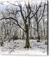 English Forest Snow Art Acrylic Print