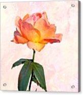 English Garden Rose Acrylic Print