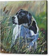 English Pointer In The Field Acrylic Print