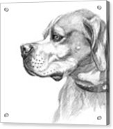 English Pointer Sketch Acrylic Print
