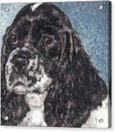 English Springer Spaniel Annie Acrylic Print by Melissa J Szymanski