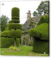 English Yew Topiary Acrylic Print