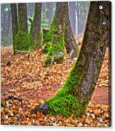 Enjoying The Forest Of Oak Run Acrylic Print