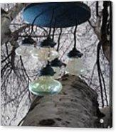 Enlightened Birch Trees Acrylic Print