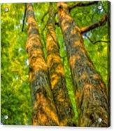 Enlightened Trees Acrylic Print
