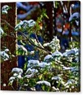 Enlightened Winter Acrylic Print