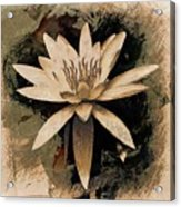 Enlightenment Acrylic Print