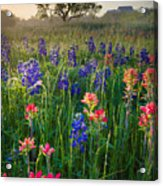 Ennis Morning Acrylic Print