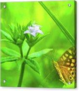 Entre Flors Acrylic Print