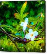Entwined Chiaroscuro Acrylic Print