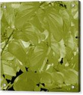 Epiphnay 1 Acrylic Print