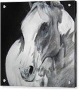 Equestrian Beauty Acrylic Print