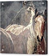 Equine Appearance Acrylic Print