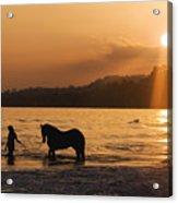 Equine Beach Time Acrylic Print