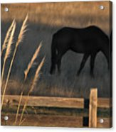 Equine Evening N. California Acrylic Print