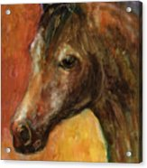 Equine Horse Painting  Acrylic Print