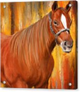 Equine Prestige - Horse Paintings Acrylic Print