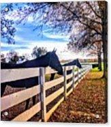 Equine Profiles Acrylic Print