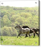 Equines For Freedom Acrylic Print