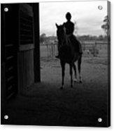 Equus Sapien I Acrylic Print