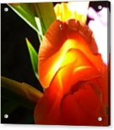 Erotic Of Flower Acrylic Print