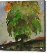 Esoteric Tree Acrylic Print