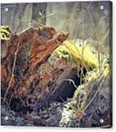 Essential Dead Tree Acrylic Print