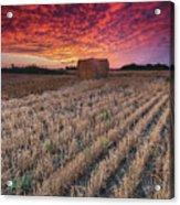 Essex Hay At Sunrise Acrylic Print