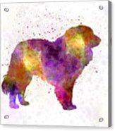 Estrela Mountain Dog In Watercolor Acrylic Print