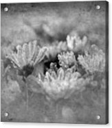 Etched In Stone 6 Acrylic Print