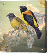 Ethereal Birds On Snowy Branch Acrylic Print
