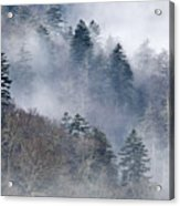 Ethereal Forest - D008248 Acrylic Print