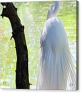 Ethereal Snowy Egret Acrylic Print