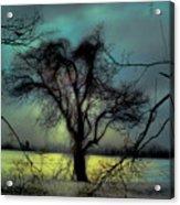 Ethereal Trees Acrylic Print